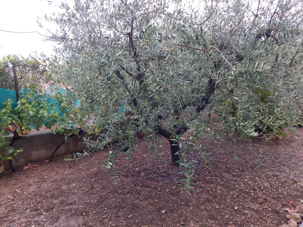 Foto 42 (V-693/2019) - Unifamiliar aislada en Venda a Sant Martí Sarroca